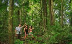 Discover the rainforest with expert guides